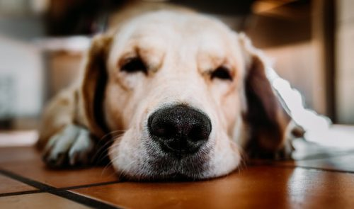 frequently-asked-questions-about-dog-depression